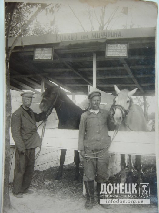 Продукция колхоза им. Мичурина - лошади