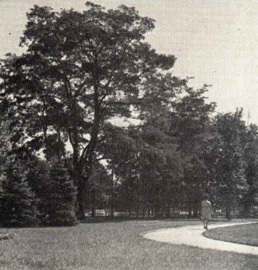 Поляна в саду общественного центра Киевского района города