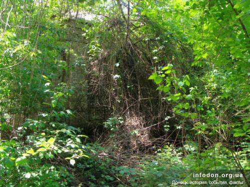 Внутренний дворик превратился в джунгли
